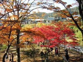 中野のもみじ山(2005-11-05)