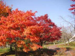 虹の湖公園(道の駅)の紅葉 2005-11-05